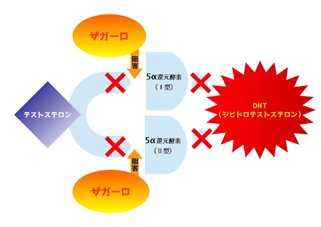 ザガーロ阻害図2